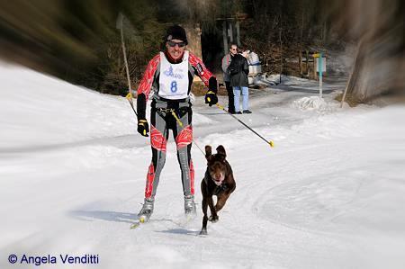 SkiJöring1