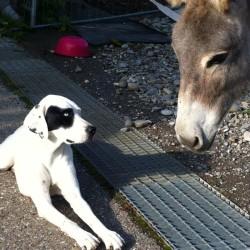 Manon und der Esel