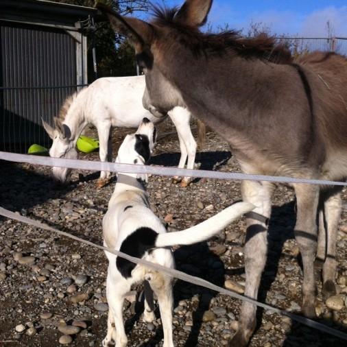 Manon liebt Tiere